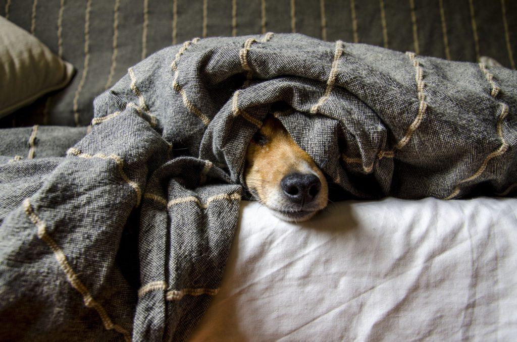 Trouble du comportement chien