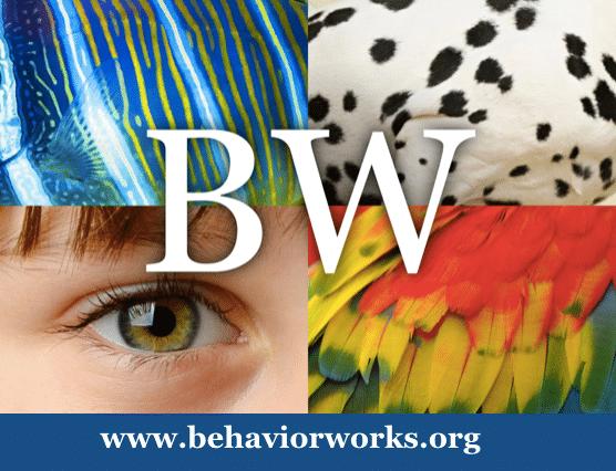 Badge Behavior Work