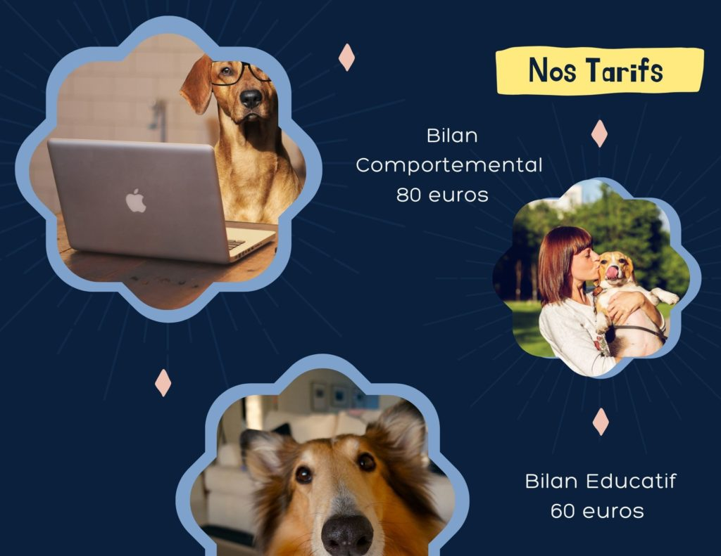 Tarifs The Dog's Compagnie